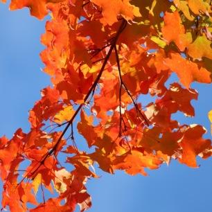 Fall Trees - 1 (1)