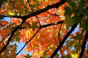 Fall Trees - 1 (2)