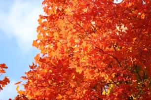 Fall Trees - 1 (3)